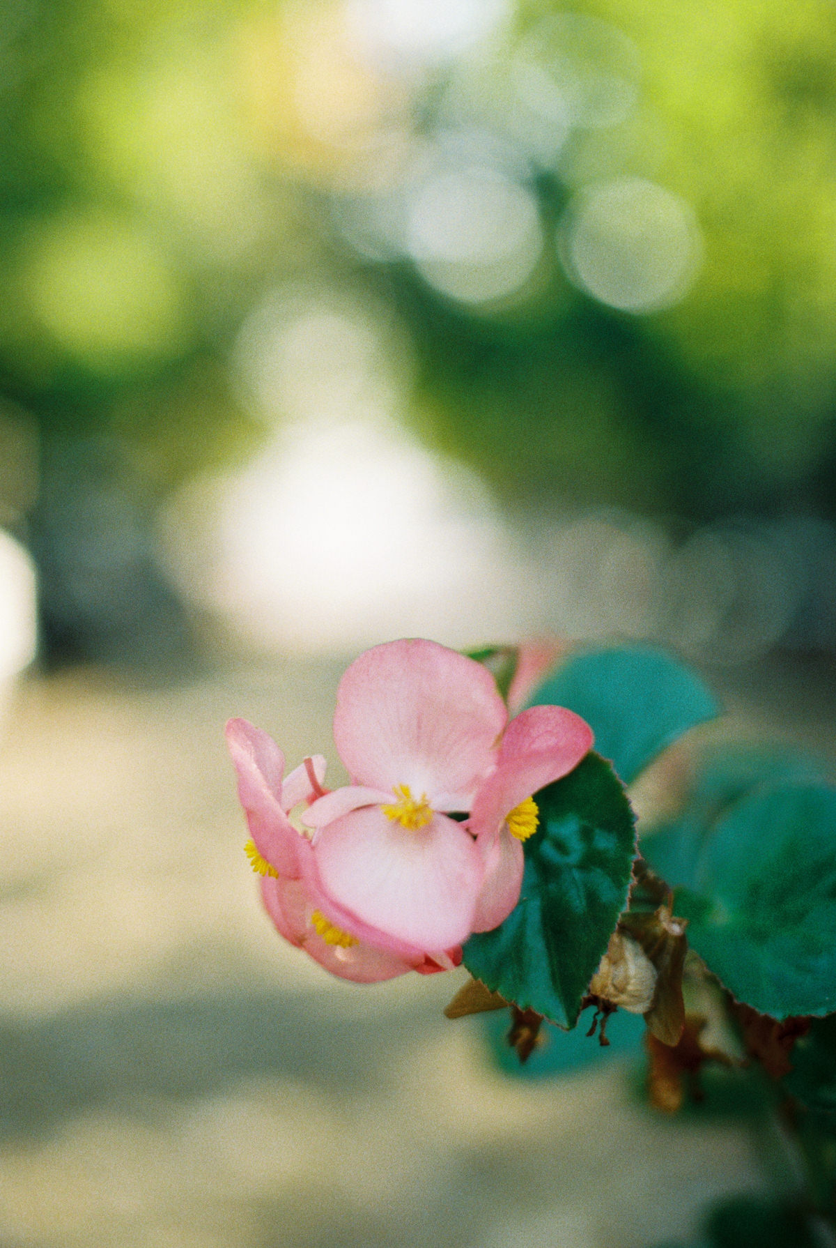 flowers on film photo by Matoli Keely Photography