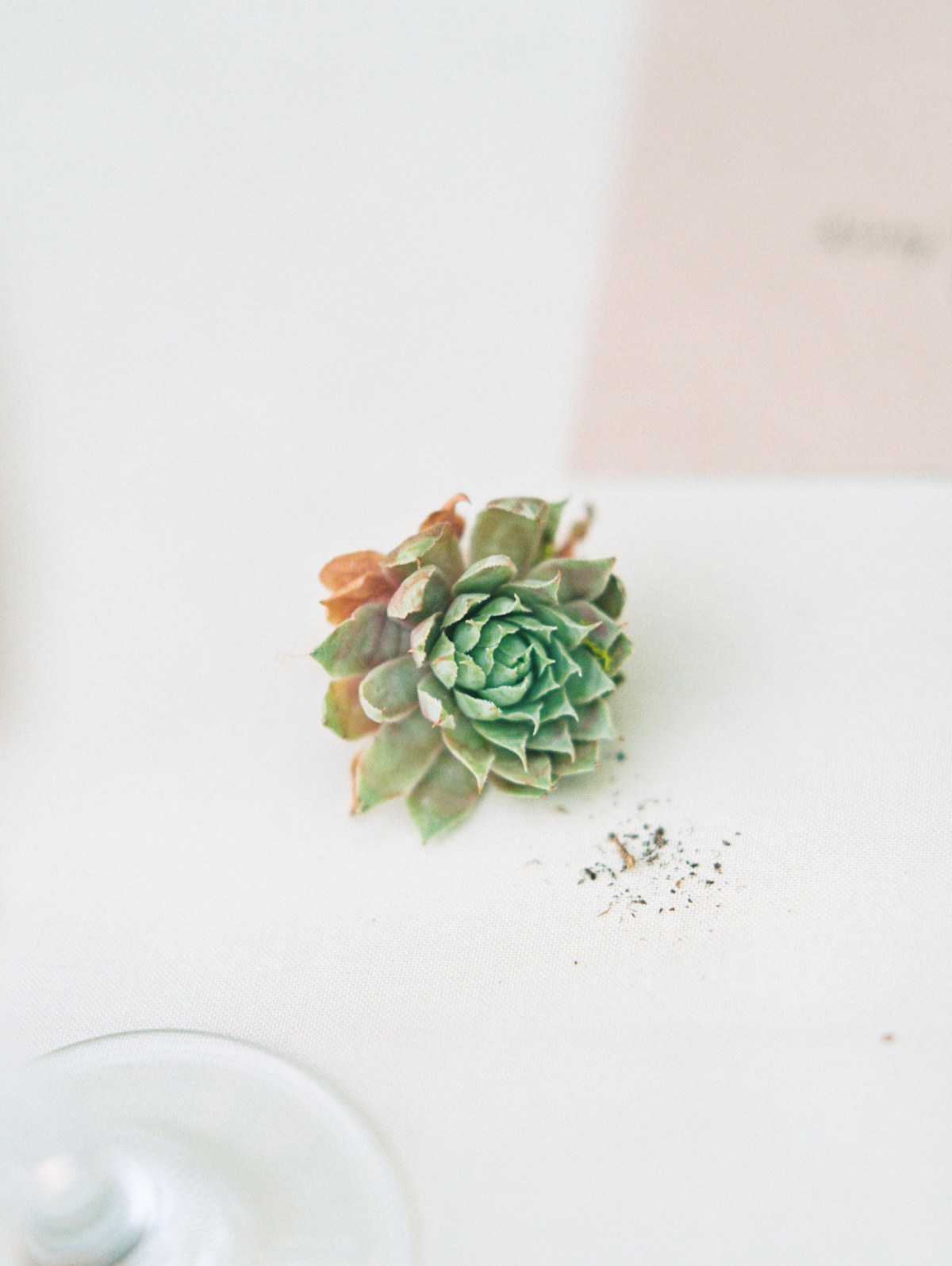 succulent wedding photo by Matoli Keely Photography